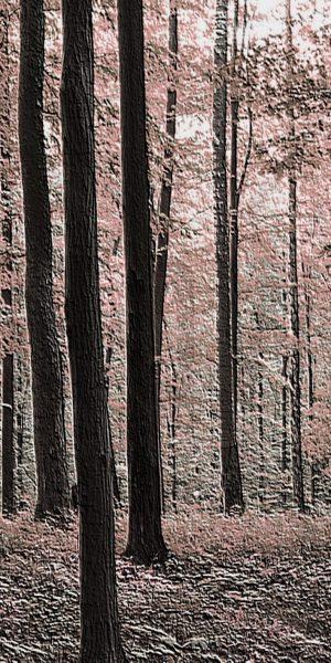 rural-forest_erbjudande.jpg